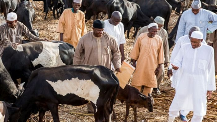 {Watch Video} Buhari Snubs Kidnapped Faculty college students Problem As He Visits His Cows In Katsina